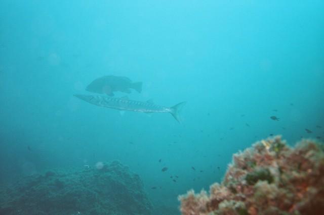 200308_CPS_Voyage Estartit Marino_036