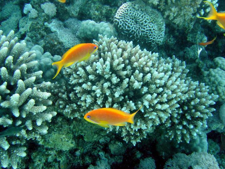200407_CPS_Voyage Egypte Safaga_002