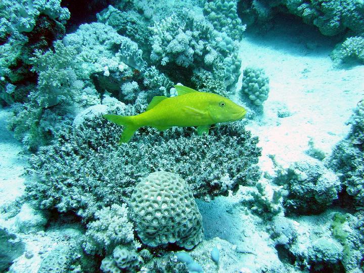 200407_CPS_Voyage Egypte Safaga_004