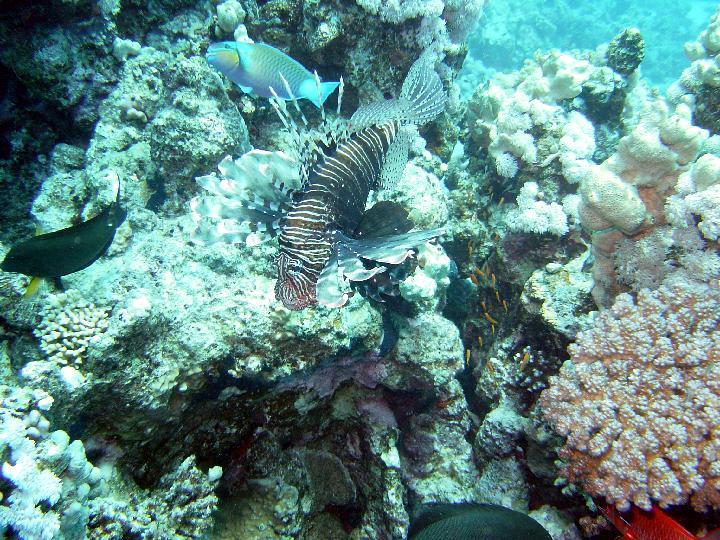 200407_CPS_Voyage Egypte Safaga_006