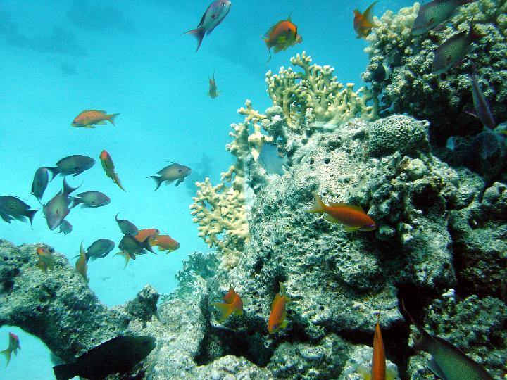 200407_CPS_Voyage Egypte Safaga_008
