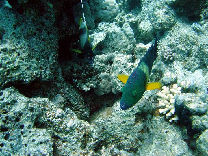 200407_CPS_Voyage Egypte Safaga_009