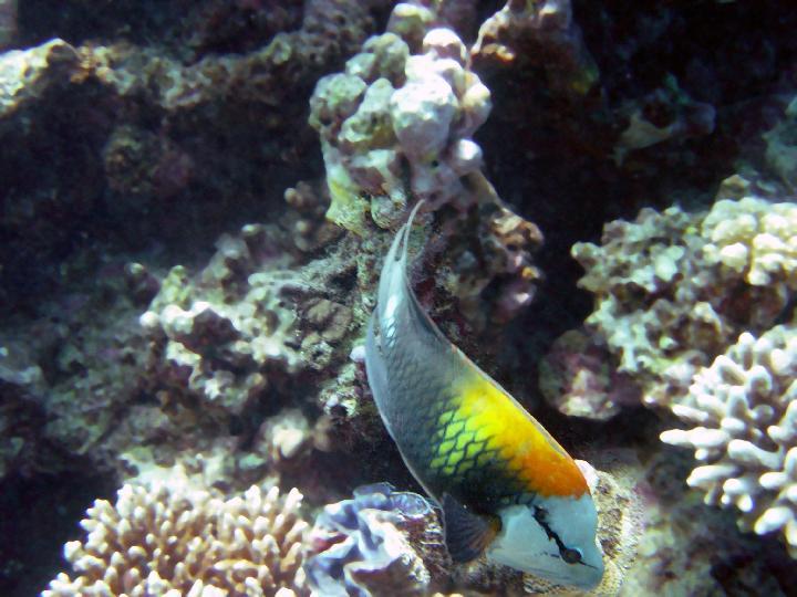 200407_CPS_Voyage Egypte Safaga_010