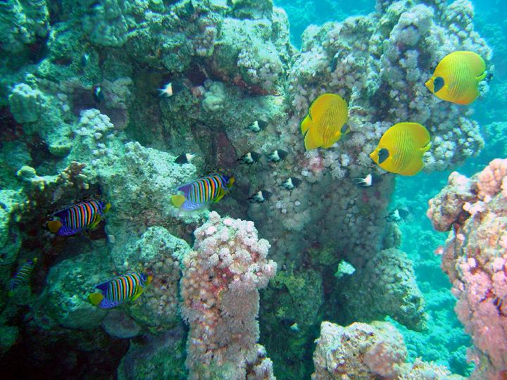 200407_CPS_Voyage Egypte Safaga_014