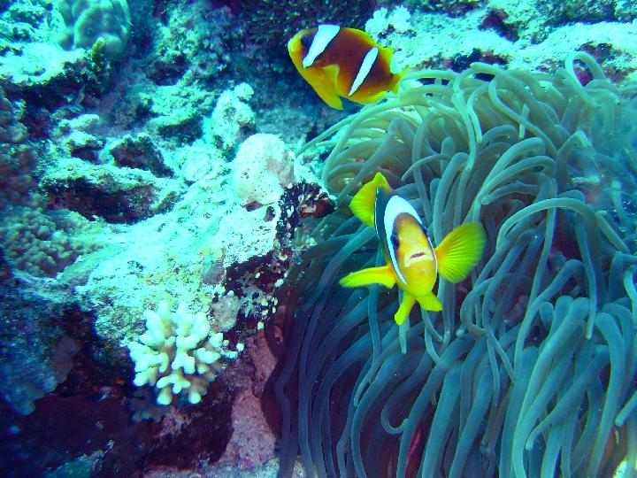 2004_07_Voyage Egypte Safaga