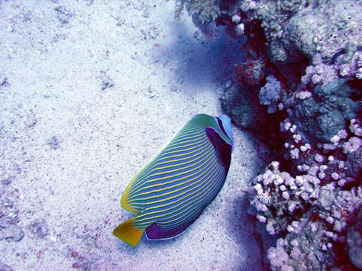 200407_CPS_Voyage Egypte Safaga_029