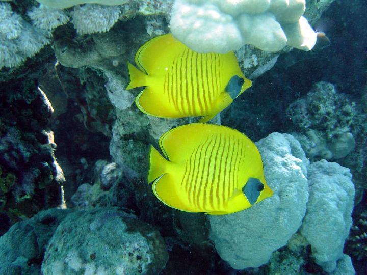 200407_CPS_Voyage Egypte Safaga_030
