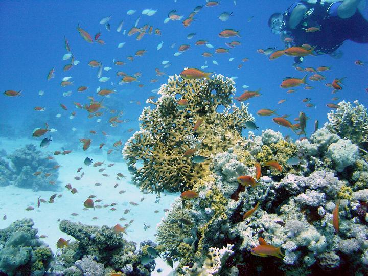 200407_CPS_Voyage Egypte Safaga_032