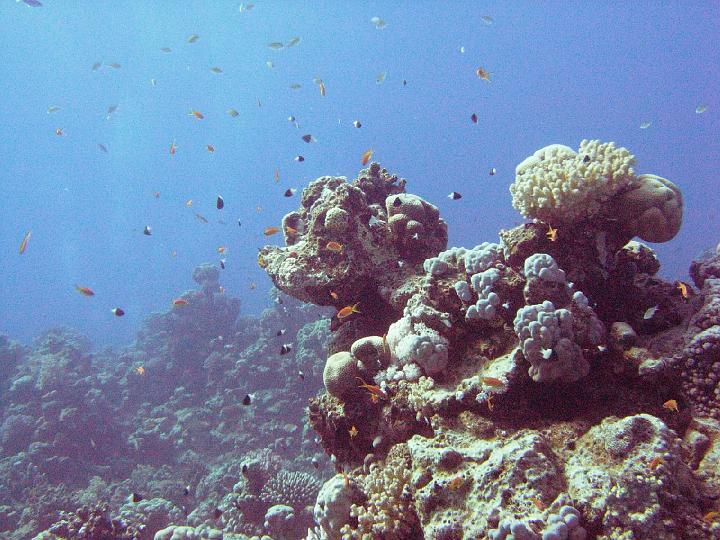 200612_CPS_Egypte Al Qusair_008