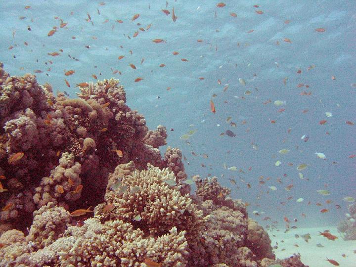 200612_CPS_Egypte Al Qusair_012