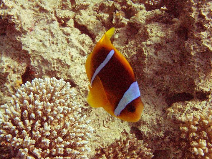 200612_CPS_Egypte Al Qusair_027