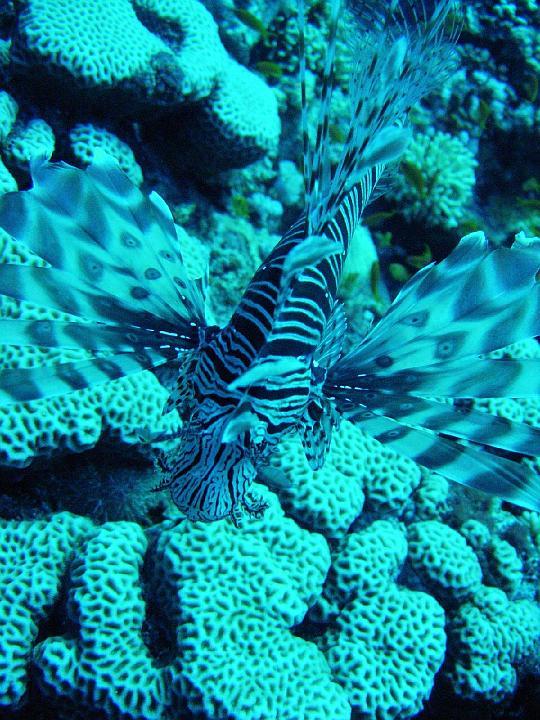 200612_CPS_Egypte Al Qusair_038