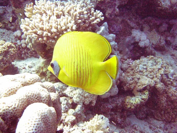 200612_CPS_Egypte Al Qusair_040