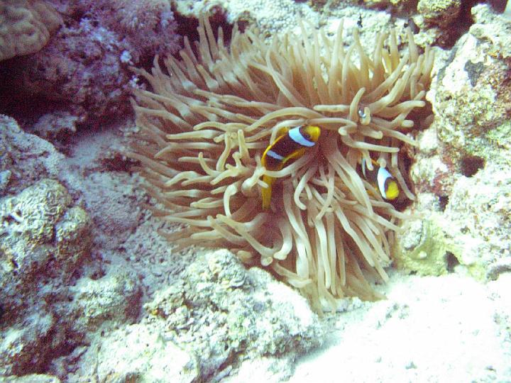 200612_CPS_Egypte Al Qusair_042