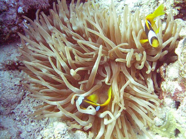 200612_CPS_Egypte Al Qusair_043