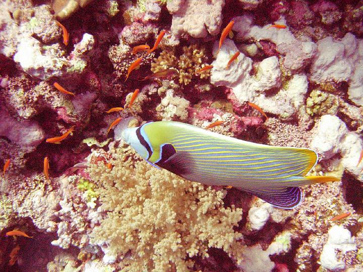 200612_CPS_Egypte Al Qusair_055
