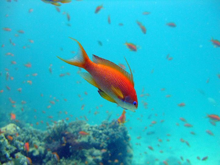200706_CPS_Voyage Egypte El Gouna_002