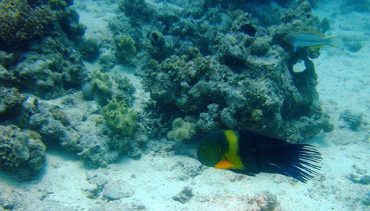 200706_CPS_Voyage Egypte El Gouna_010
