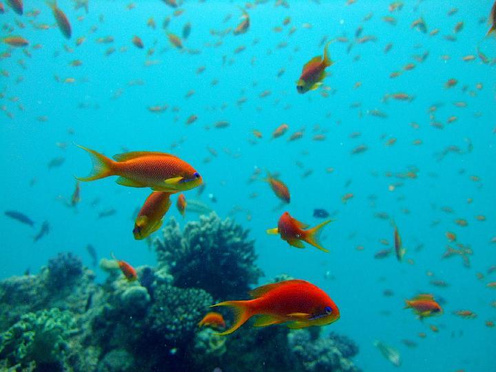 200706_CPS_Voyage Egypte El Gouna_012