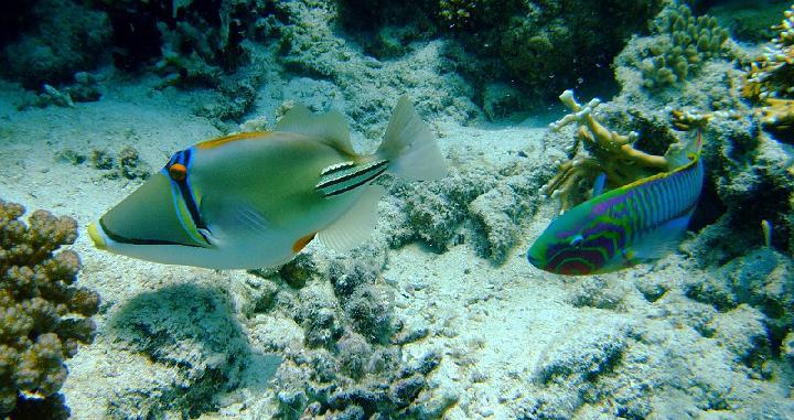 200706_CPS_Voyage Egypte El Gouna_013