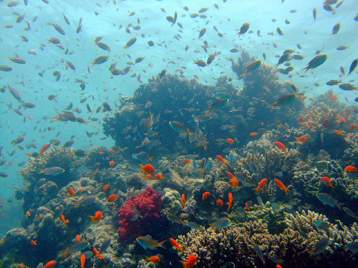 200706_CPS_Voyage Egypte El Gouna_014