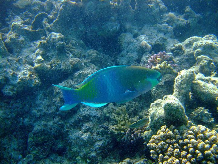 200706_CPS_Voyage Egypte El Gouna_019