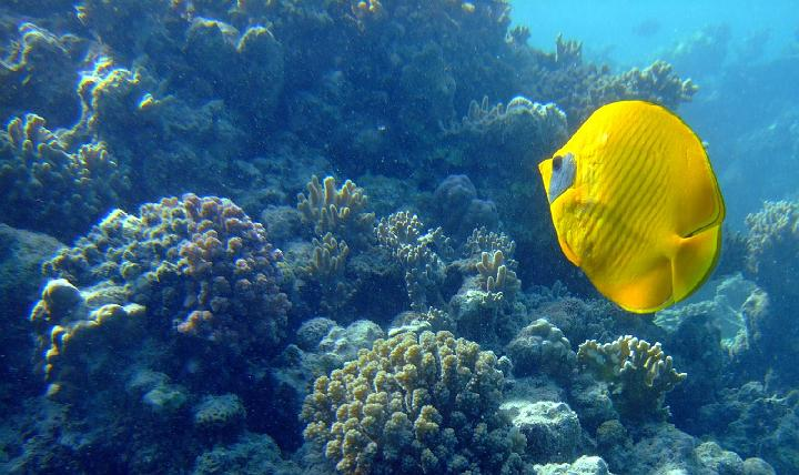 200706_CPS_Voyage Egypte El Gouna_021