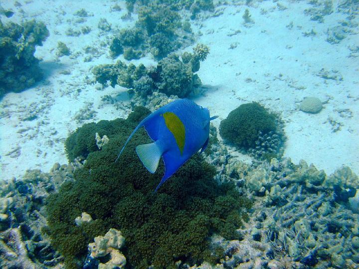 200706_CPS_Voyage Egypte El Gouna_022