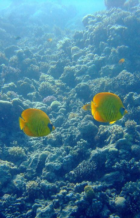 200706_CPS_Voyage Egypte El Gouna_023