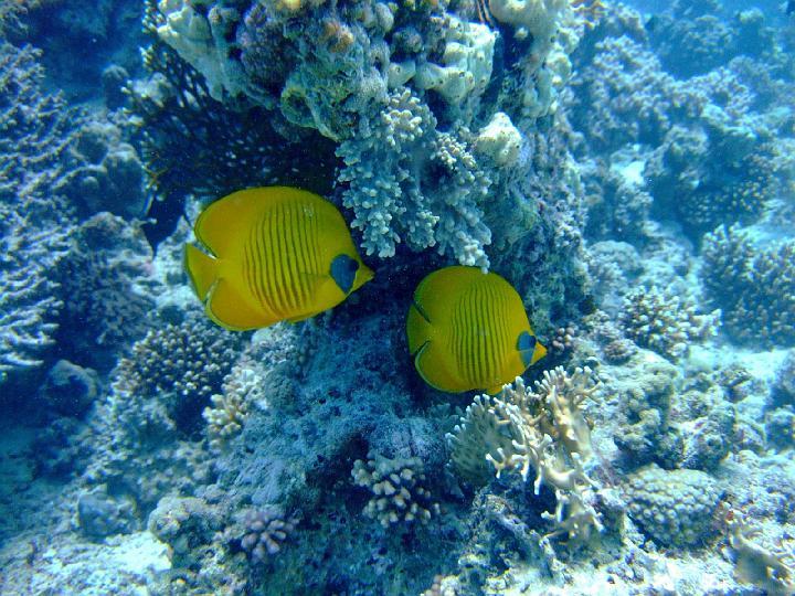 200706_CPS_Voyage Egypte El Gouna_025