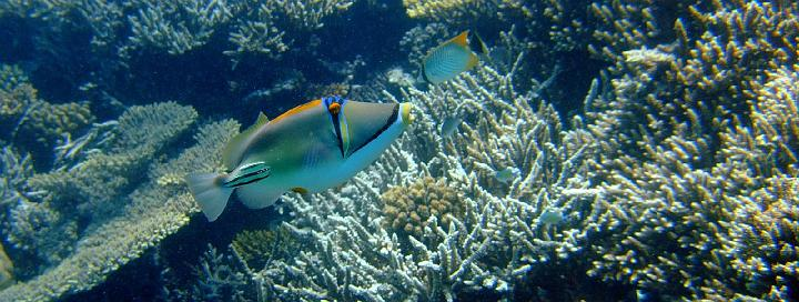 200706_CPS_Voyage Egypte El Gouna_027