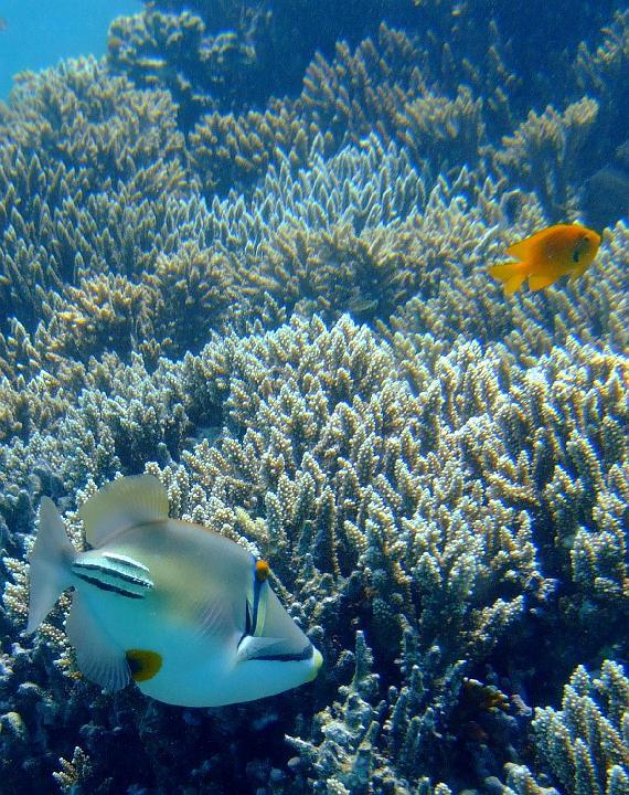200706_CPS_Voyage Egypte El Gouna_028