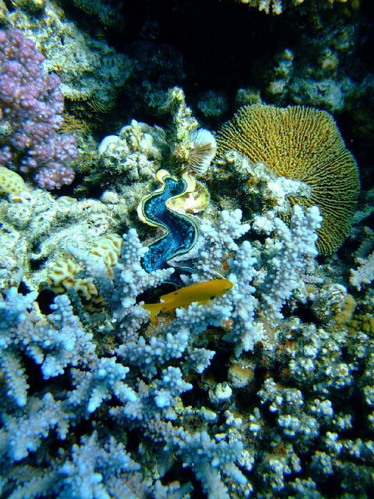 200706_CPS_Voyage Egypte El Gouna_029