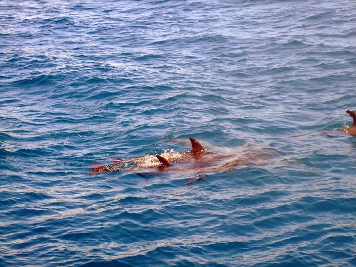 200706_CPS_Voyage Egypte El Gouna_045