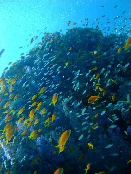 200706_CPS_Voyage Egypte El Gouna_060