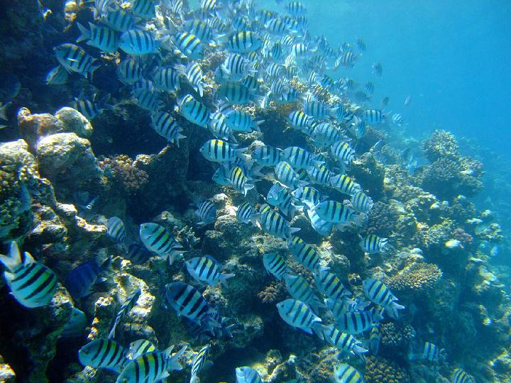 200706_CPS_Voyage Egypte El Gouna_067