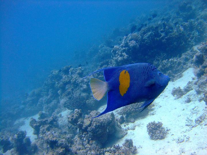 200706_CPS_Voyage Egypte El Gouna_076