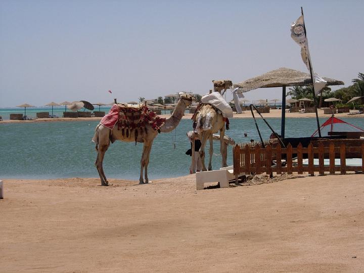 200706_CPS_Voyage Egypte El Gouna_115